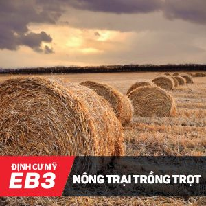 eb3-nong-trai-thong-23nov2016